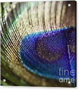 Close Feather Acrylic Print