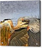Close Flyby Acrylic Print