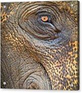 Close-up Elephant Eye Acrylic Print