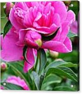 Close Up Flower Blooming Acrylic Print