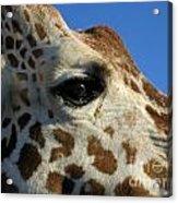 The Giraffe's Eye Acrylic Print
