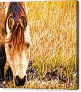 Close Up In The Marsh Acrylic Print