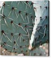 Close-up Of A Prickly Pear Cactus Acrylic Print
