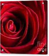 Close Up Of A Red Rose Acrylic Print