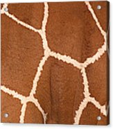 Close-up Of A Reticulated Giraffe Acrylic Print