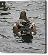 Close Up Of Duck Back Acrylic Print