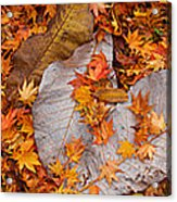 Close-up Of Fallen Maple Leaves Acrylic Print
