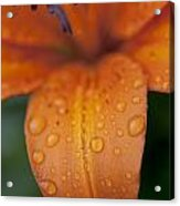 Close-up Of Orange Lily Flower After Acrylic Print
