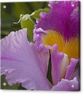 Close-up Of Purple Orchid Flowers Acrylic Print