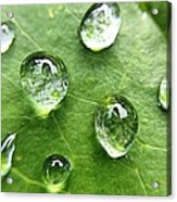 Close-up Of Water Drops On Leaf Acrylic Print