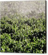 Close-up Of Water From A Sprinkler Acrylic Print