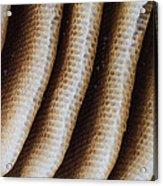 Close-up Of Wild Honey Bee Combs Acrylic Print