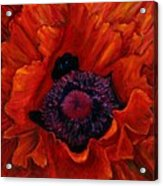 Close Up Poppy Acrylic Print by Billie Colson