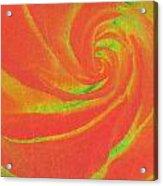 Close-up Rose Acrylic Print