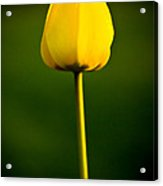 Closed Yellow Flower Acrylic Print