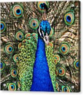 Closeup And Personal Acrylic Print