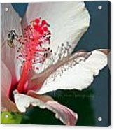 Flight Of A Bee  Acrylic Print