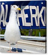 Closeup Of A Seagull On A Fisher Boat  Acrylic Print