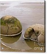 Closeup Of Famous Spherical Moeraki Boulders In Nz Acrylic Print