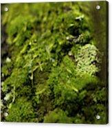 Closeup Of Moss And Lichen. Rhoen Acrylic Print