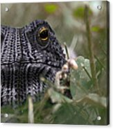 Clothed Toad Acrylic Print
