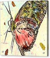Cloud Butterfly Acrylic Print by Jill Balsam