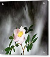 Cloud Mountain Cherokee Rose Acrylic Print