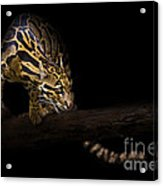 Clouded Existence Acrylic Print by Ashley Vincent