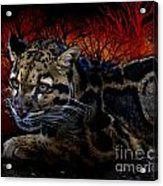 Clouded Leopard Two Acrylic Print