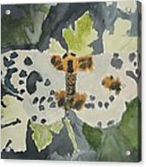 Clouded Magpie Watercolor On Paper Acrylic Print