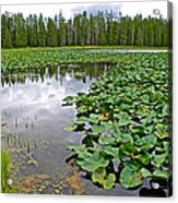 Clouds Among The Lily Pads In Swan Lake In Grand Teton National Park-wyoming  Acrylic Print