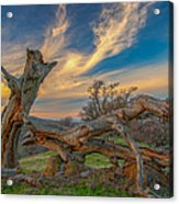 Clouds Over Broken Tree At Sunset Acrylic Print