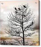 Cloudy Day Blackbirds Acrylic Print