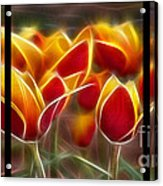 Cluisiana Tulips Triptych  Acrylic Print