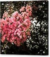 Clump Of Flowers Acrylic Print