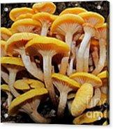 Cluster Fungi Acrylic Print