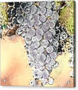 Cluster Of Grapes Acrylic Print by Artist and Photographer Laura Wrede
