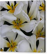 Cluster Of White Acrylic Print