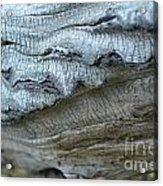 Cluthu Tree Acrylic Print