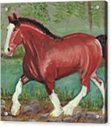 Clydesdale Acrylic Print