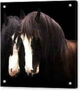 Clydesdales Acrylic Print