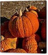 Knarly Pumpkin Acrylic Print