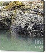 Coast Ecosystems Acrylic Print