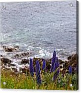 Coastal Cliff Flowers Acrylic Print