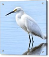 Coastal Crane Acrylic Print