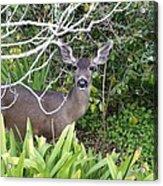 Coastal Deer Acrylic Print