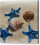 Coastal Dreams Acrylic Print