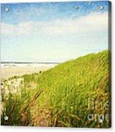 Coastal Dunes Acrylic Print