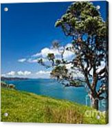 Coastal Farmland Landscape With Pohutukawa Tree Acrylic Print