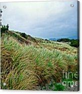 Coastal Flora, Oregon Acrylic Print
